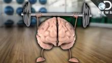 Exercise Improves Your Memory