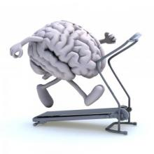 Exercise & Brain
